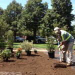 Plant Installations - Greener Horizon Landscape Management & Construction, Middleboro, MA
