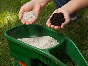 Hands holding types of lawn fertilizer above a spreader.