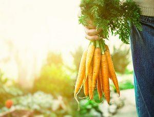 Fresh Carrots from the garden.