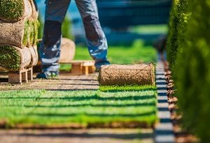 Landscaper installing new sod from rolls on a pallet.
