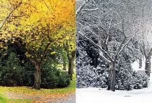 Estate in Fall and Winter