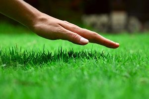 Hand over green lush grass