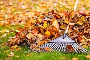 Fall Leaves With Rake.